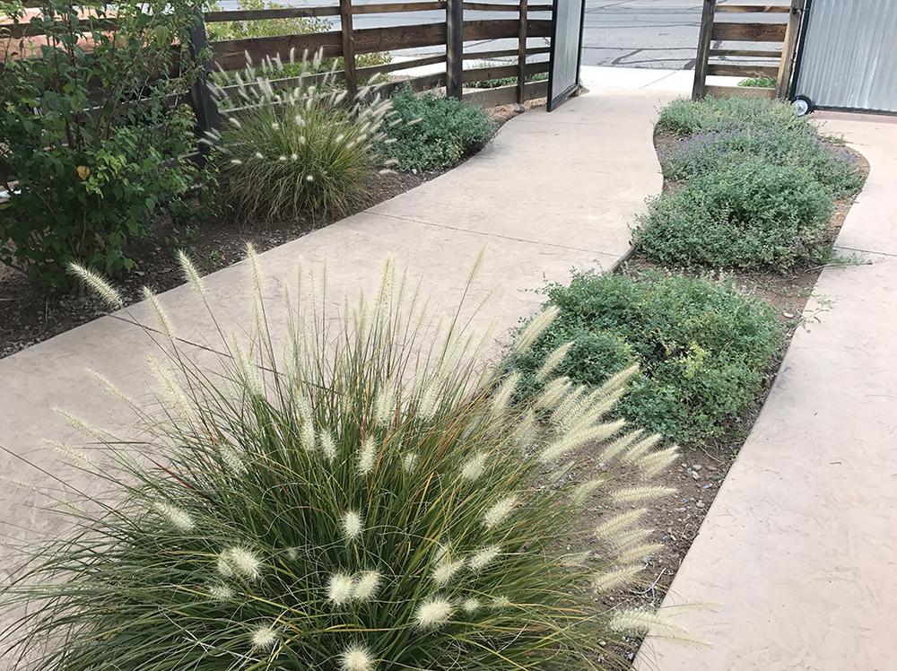 web grass path fence residence